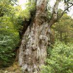 4月、5月の屋久島観光、人気の縄文杉登山に行くにはどうしたらいいの?