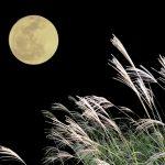 十五夜、どうして月にウサギがいるの?月とうさぎの絵本。