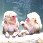 定番から穴場まで入ってみたい屋久島のおススメの温泉を紹介します!